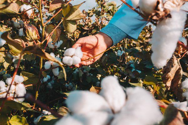 Moda sostenible Camisetas algodón orgánico